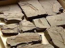Fósiles de Krumvíř, foto: ČT24