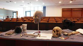 Tzv. Wanklova lebka, vedle rekonstrukce podoby 'princezny', foto: Moravské zemské muzeum