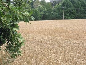 En la agricultura ecológica no se usan abonos, insecticidas ni hormonas