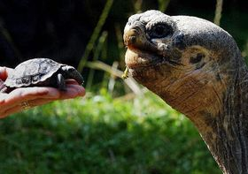Elephant tortoise, photo: CTK