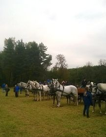 Kladruber horses, photo: Strahinja Bućan